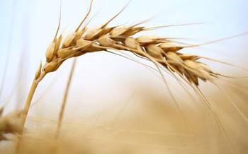 小麦变量施肥机控制参数设计与试验虚拟仿真实验课程建设